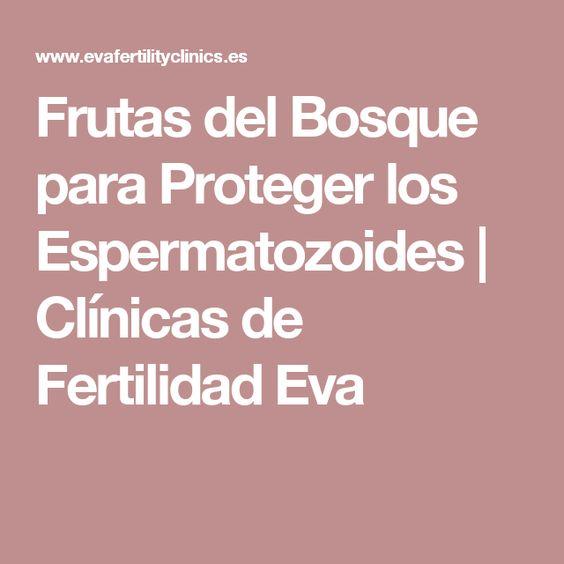 Frutas del Bosque para Proteger los Espermatozoides | Clínicas de Fertilidad Eva