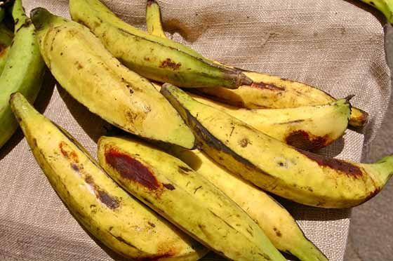 La banane plantain est consommée particulièrement en Amérique centrale, dans certains pays d'Amérique du Sud, dans les Caraïbes et dans une grande partie de l'Afrique. Dans la médecine populaire, les bananes plantain sont très utilisées pour traiter la diarrhée. D'autre part, une étude effectuée sur des enfants souffrant de diarrhée chronique a prouvé qu'une consommation régulière du fruit pourrait traiter, prévenir la diarrhée et contrôler la prise de poids.