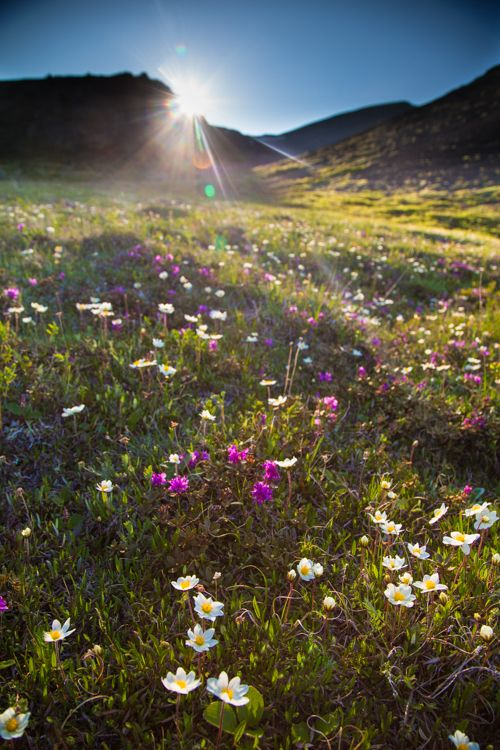 Tips To Improve Your Spring Landscape Photography With Images Spring Landscape Photography Landscape Photography Nature Spring Landscape
