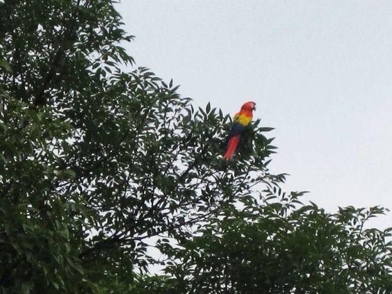 Nada que le combine mejor al cielo que un ave libre Medellin Colombia