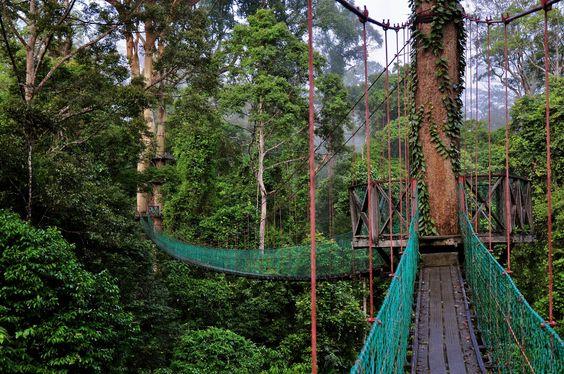 Danum Valley Conservation Area ~ Green Sabah