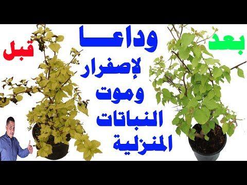 اسباب اصفرار اوراق النباتات و طرق علاجها وداعا اصفرار وحروق وموت النباتات المنزلية Youtube Plant Problems Plants Gardening Tips