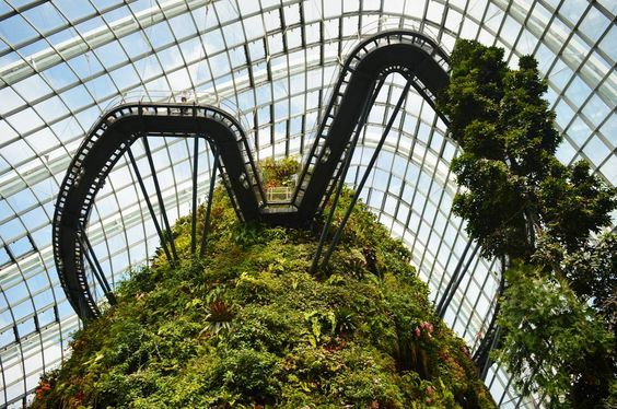 Throwback to exploring Singapore's amazing Gardens by the Bay and Cloud Forest    #travel #tbt