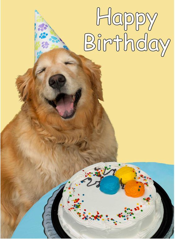 Birthday Wishes For My Pet Dog
