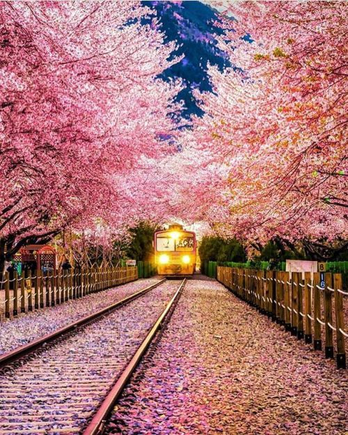 Jinhae Korea Picture By Jackmartinphotoart Wonderful Places For A Feature Via Wonderful Places On Instagram Japan Travel South Korea Travel Scenery