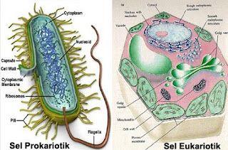 Tabel Perbedaan Sel Prokariotik Dan Eukariotik Perbedaan Sel Hewan Dan Sel Tumbuhan Perbedaan Sel Prokariotik Dan Eukariotik Pdf J Sel Tumbuhan Sel Hewan Hewan