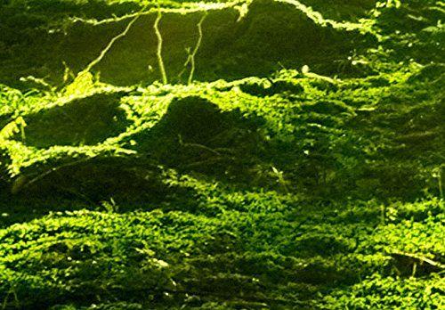 200x100 ! XXL Format + Bilder XXL & Fertig Aufgespannt & Top Vlies Leinwand + Wandbild + 5 Teilig + Landschaft + Wald + Wand Bilder 030213-32 + 200x100 cm B&D XXL +++ Riesen Bilder Kunstdruck Wandbild +++
