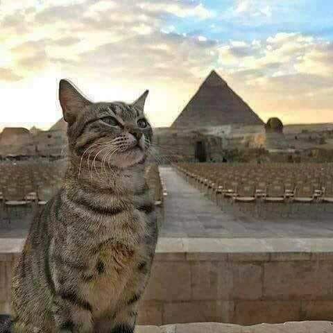 フィフィ Fifi Egypt さん Twitter 子猫 エジプトの猫 キュートな猫