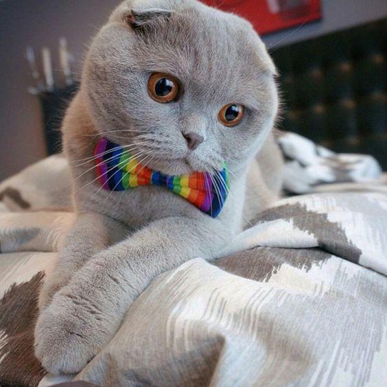 nobbypets's photo on InstagramHope you feel better @millathecat...get better soon we love you! #kitty #kittens #pet #pets #animal #animals #petstagram #petsagram #photooftheday #catsofinstagram #ilovemycat #instagramcats #nature #catoftheday #lovecats #furry #sleeping #lovekittens #adorable #catlover #instacat