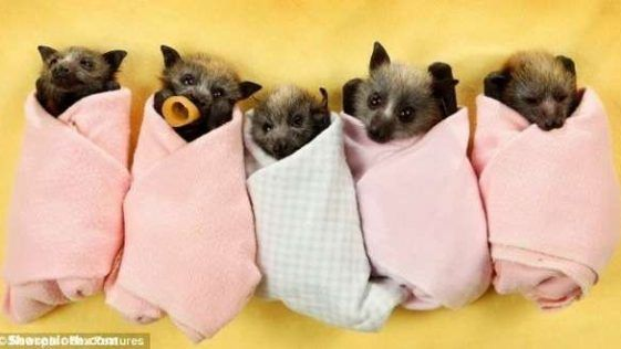 Teacup Pig Pictures So Adorable Baby Goat Pictures Cute Animals