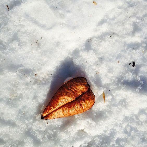 #WonderWatch 2015-18 Heart Leaf #Snow #LeafHeart