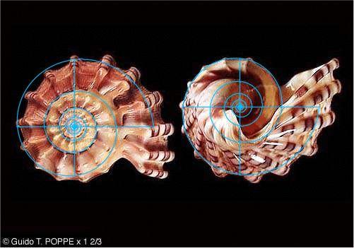 Spira Solaris Archytas-Mirabilis Part IVd2c