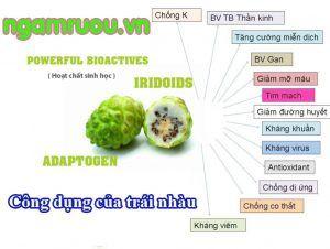 công dụng trái nhàu trong điều trị bệnh