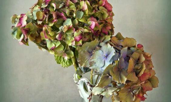 Cómo secar las hortensias