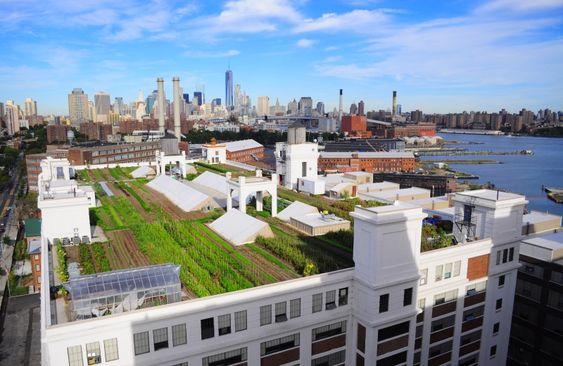A maior horta urbana já construída no topo de um prédio - The Greenest Post