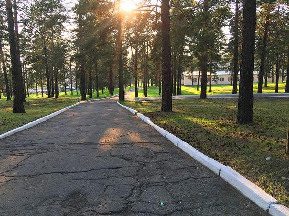 Дорожки для прогулки пешком и на велосипеде среди сосен. Фото: Evgenia Shveda