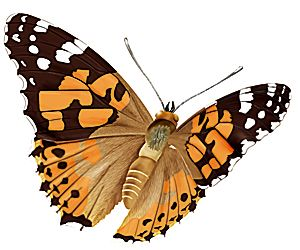 wwwrusticafr les 10 papillons les plus courants de nos jardins