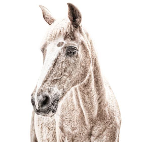 Magnetisch behang met print Paard - Funky Walls - Dé webshop voor vintage en modern behang