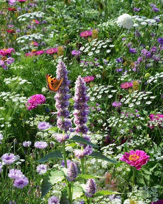 English garden for butterflies and hummingbirds.