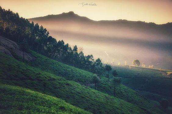 Prominence~#surbhikaushik #goodshotz~Can't get over Munnar 😁