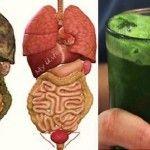 Limpe seu fígado da gordura