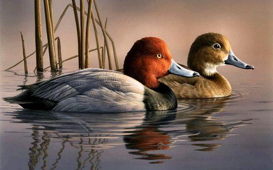 Catalog redhead hunting