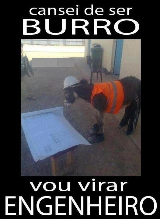 Cansei de ser Burro! kkkkk