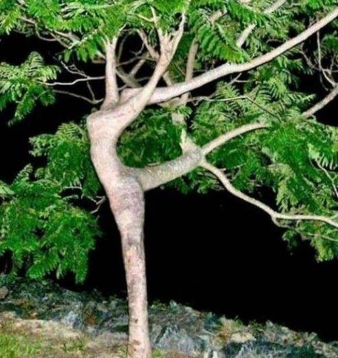 Looks Like Tree is Dancing