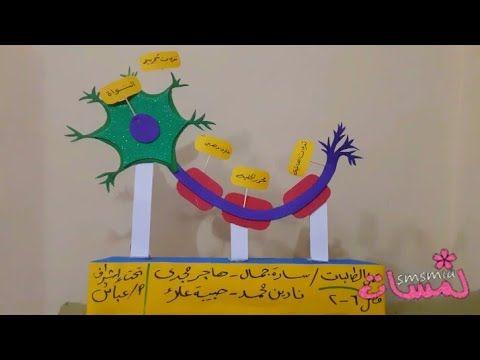 نشاط الخلية العصبية ماكيت مجسم خطوة بخطوة ورش عمل الانشطة المدرسية وسائل تعليمية Youtube Girl Cartoon Gaming Logos Logos