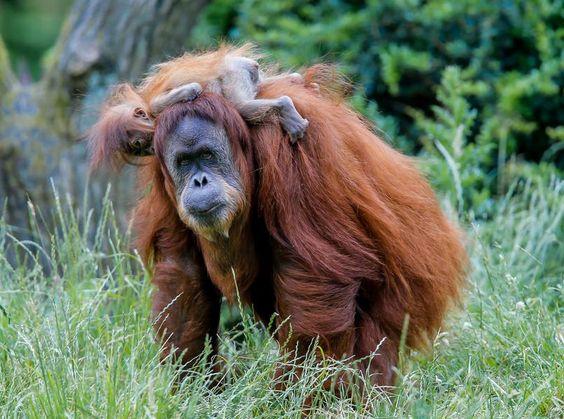 4730405_1_0614do-Yenko_Zoo_Dortmund_Schuetze_819.jpg?version=1402839991