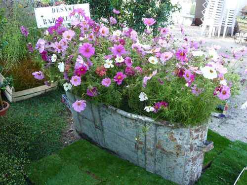 Un bain de cosmos cosmos for Decorar tu jardin