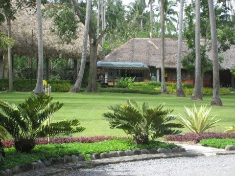 Coconut plantation in villa escudero quezon province in Villa escudero quezon province