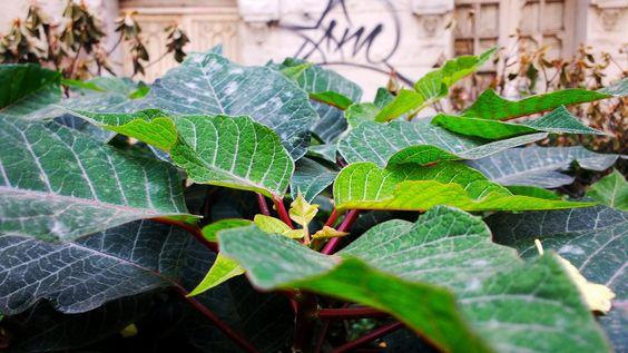 Green leaf - Jardinera en la calle