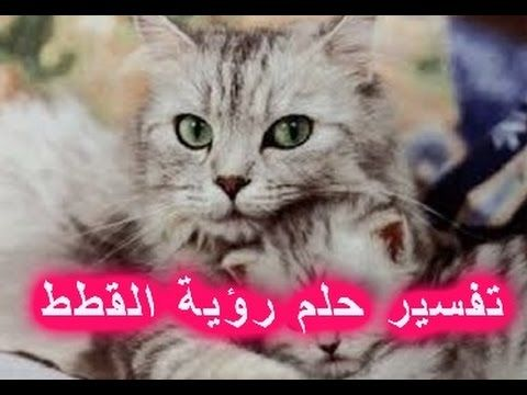 حلم القطط وتفسيره بالتفصيل كما ورد عن علماء تفسير الأحلام Cats Animals