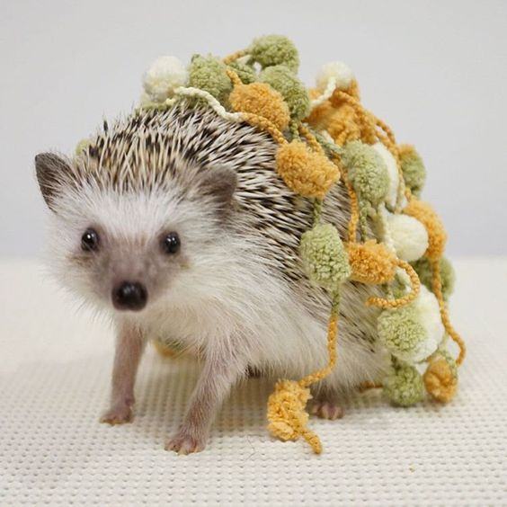 Hedgehog is all ready to cheer with her new set of pom poms.