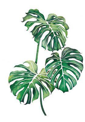 Monstera Leaves Large A3 Size Quality Canvas Print Ebay Plant Art Leaf Art Plant Painting Tropical leaf of monstera, watercolor painting. monstera leaves large a3 size quality