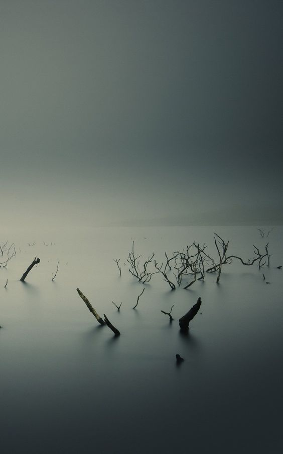 Nature iPhone 6 Plus Wallpapers - Ubuntu Gnome Mist Fog Underwater Trees iPhone 6 Plus HD Wallpaper #iPhone #6 #Plus #Wallpaper #HD #Abstract #Underwater #Frozen #Fog