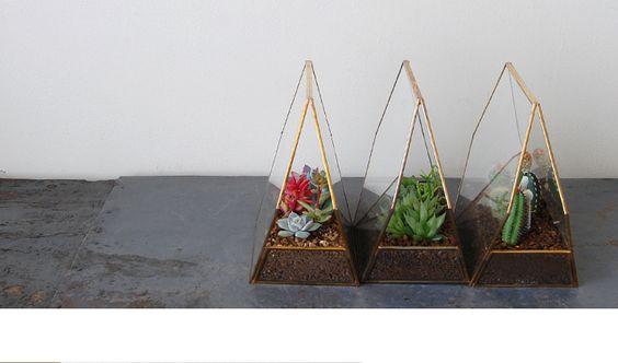 多肉植物/サボテン専門ストア solxsol
