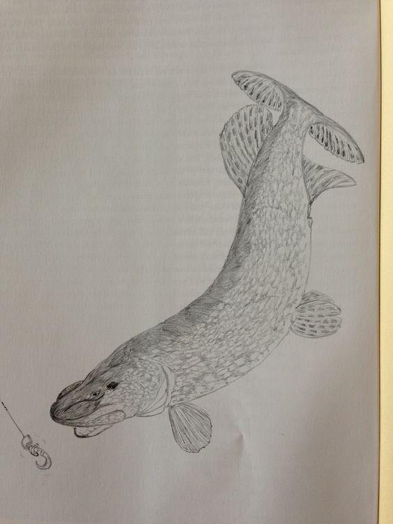 Thought this pike might make a good Lino cut.