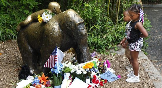 Stop talking about Harambe our dead gorilla zoo pleads