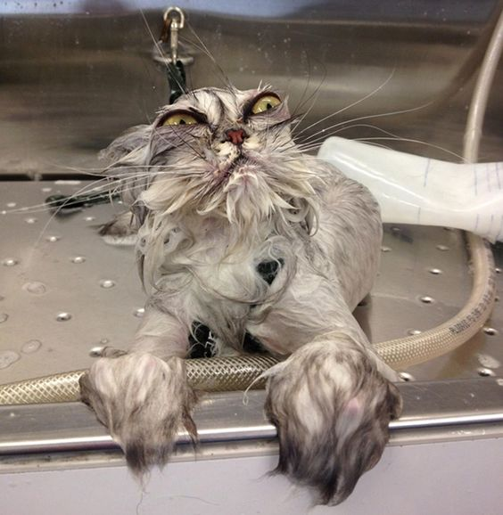 Here Are 17 Of The Meanest Looking Cats You'll Ever See.