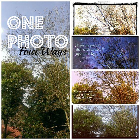 Photography Friday Blog Post: One Photo, Four Ways Using... Picasa, PicMonkey, Instagram, Pixlr'omatic. #photography #photoediting #photoapps