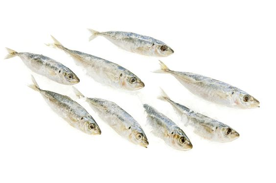 Frozen Cigar Minnows 1 lb Price: 3.00 Retail Price: 0.00 1465 Isaacson and Stein Fish Co.       Quick and easy heart-healthy meals with this Cigar Minnows. The Frozen Cigar Minnows comes in a pack of 1 lb.