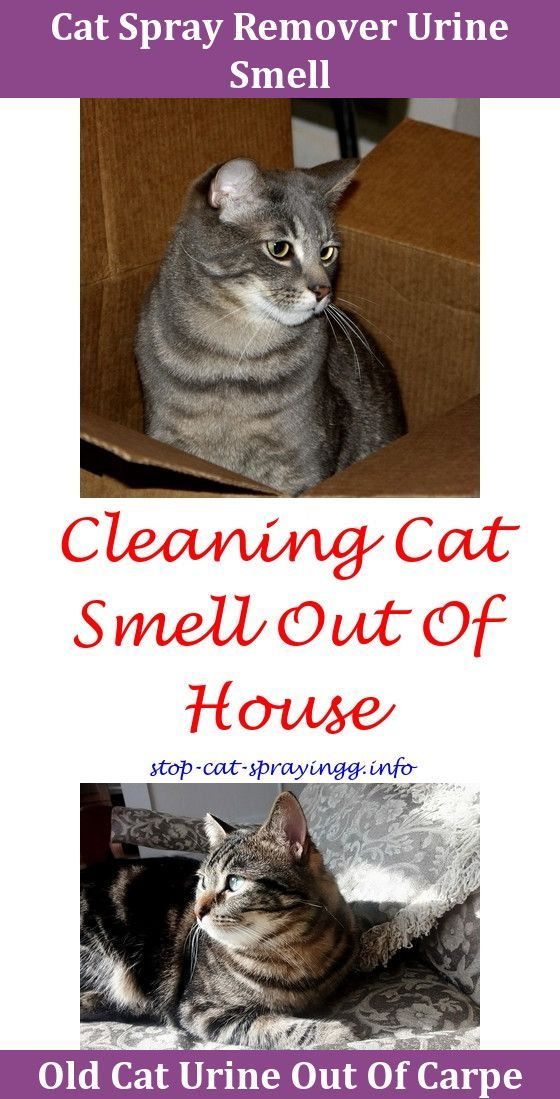 How To Train Your Cat Yes It S Possible Cat Spray Cat Pee Cat Spray Smell
