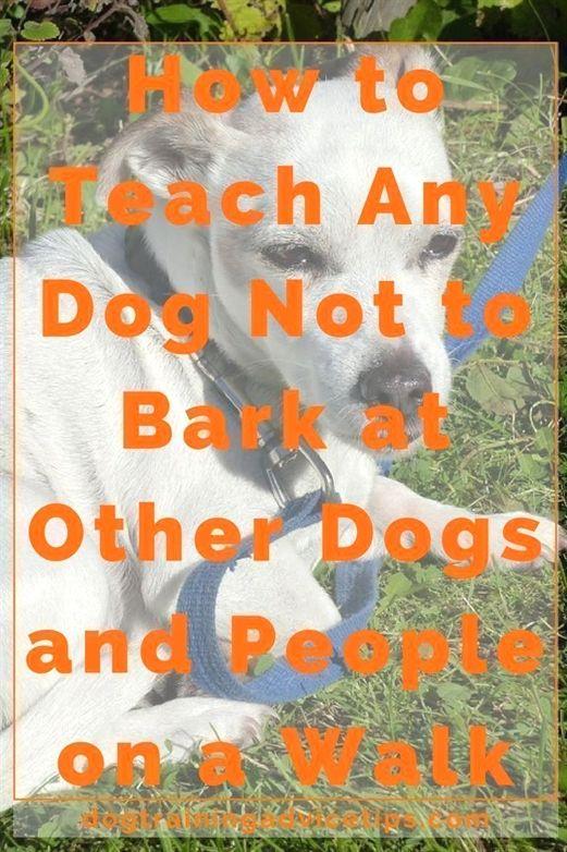 Dog Training Attention Acme Dog Training Yakima Wa Dog Training