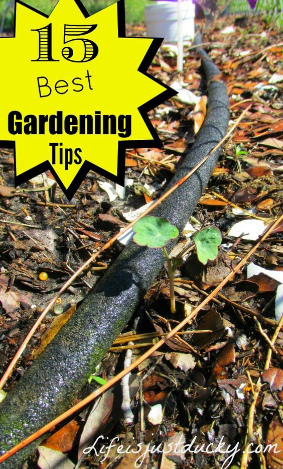 Grow a Better Garden - Check out these 15 Awesome tips for gardening success. Whether you've been Gardening for years or you are just starting out. There is something in this list for everyone!