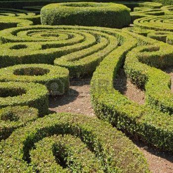 ornamental jardim de buxo corte em Bagnaia, Villa Lante, Viterbo, Lazio, It photo
