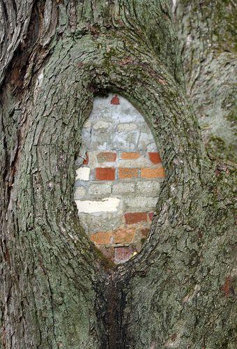 how to secretly kill a tree