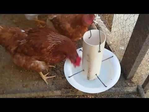 Comedero Para Gallinas 100 Reciclado Y Totalmente Gratis Youtube Comederos De Pollo Bebedero De Pollo Bebederos Para Gallinas