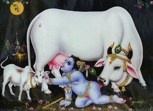 Latest Krishna Cow Photo Gallery for free download